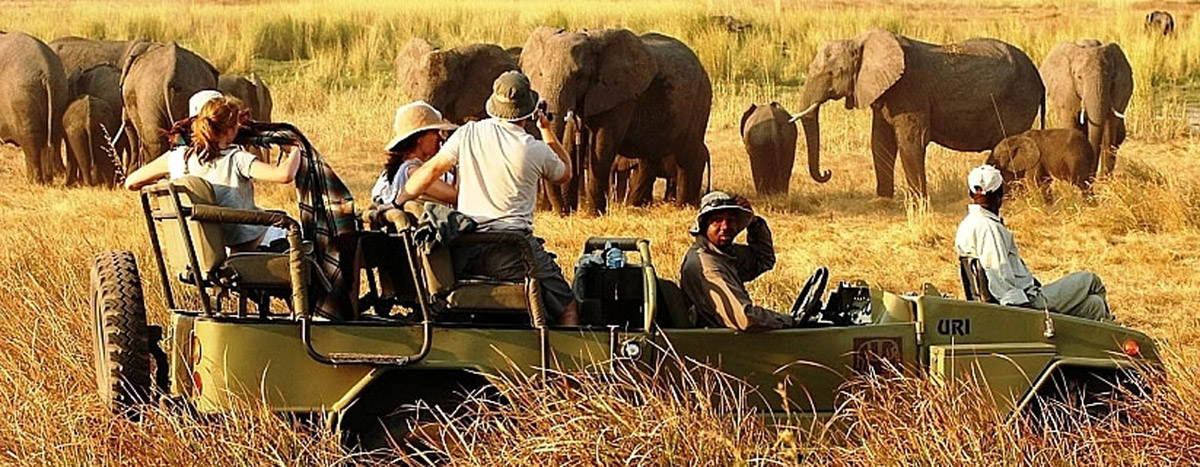 Enjoy the special safari tour experience you have always desired!